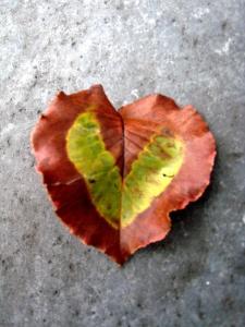 Fall, in Love